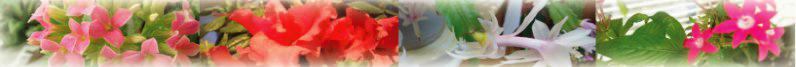 板橋区蓮根の歯医者【金子歯科】日曜診療・簡単ネット予約のトップイメージ